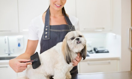 Pet Grooming For Small Dog or Cat